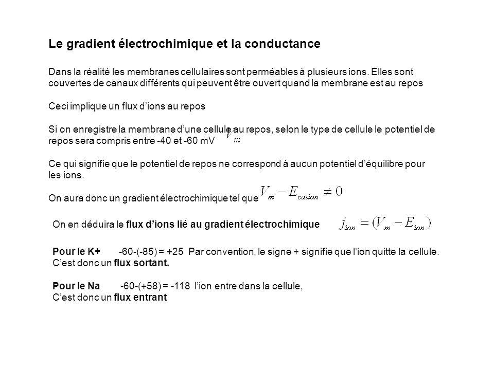 Le gradient électrochimique et la conductance