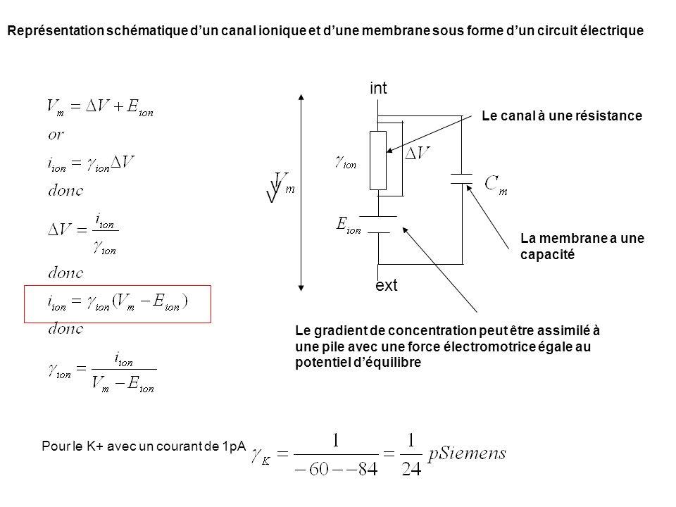 Représentation schématique d'un canal ionique et d'une membrane sous forme d'un circuit électrique