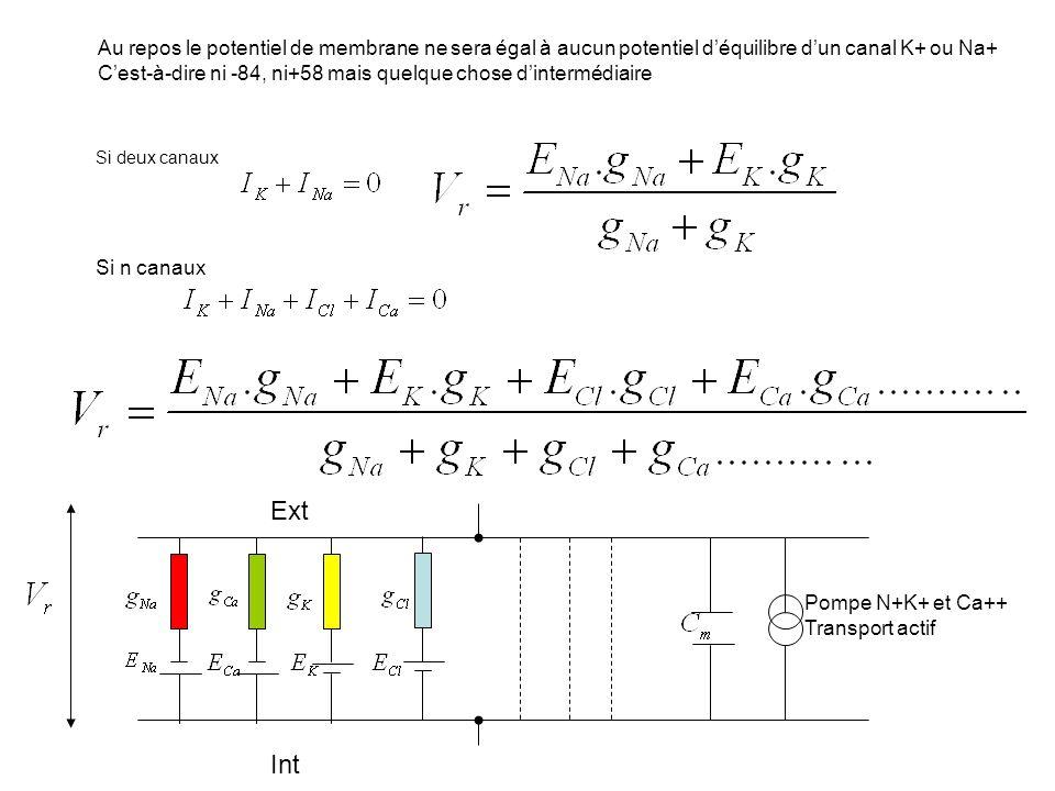 Au repos le potentiel de membrane ne sera égal à aucun potentiel d'équilibre d'un canal K+ ou Na+