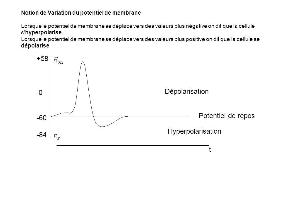 +58 -60 Dépolarisation -84 Potentiel de repos Hyperpolarisation t