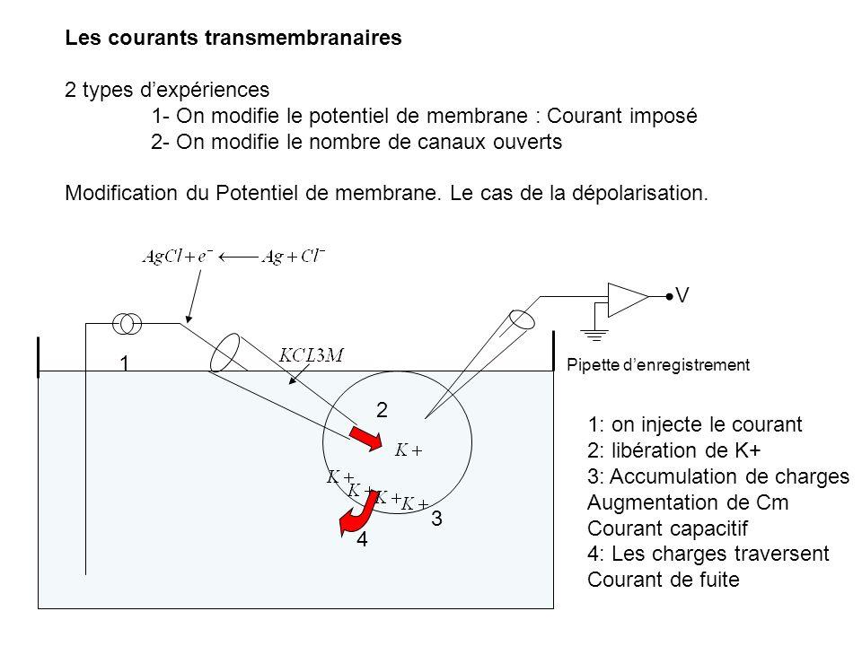 Les courants transmembranaires 2 types d'expériences