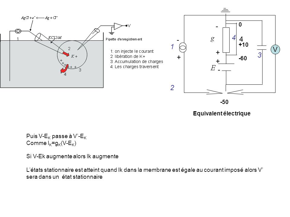 - + 4 - + 4 1 V 3 2 +10 -60 -50 Equivalent électrique