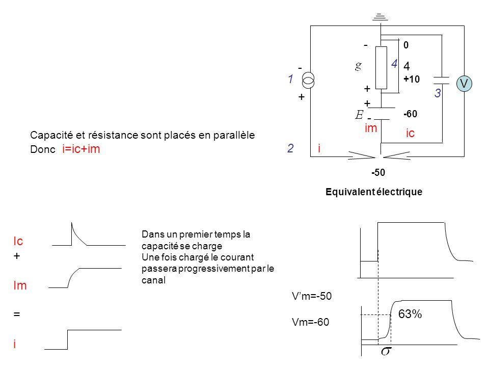 V - + +10. -60. -50. 1. 2. 3. 4. Equivalent électrique. im. Capacité et résistance sont placés en parallèle.