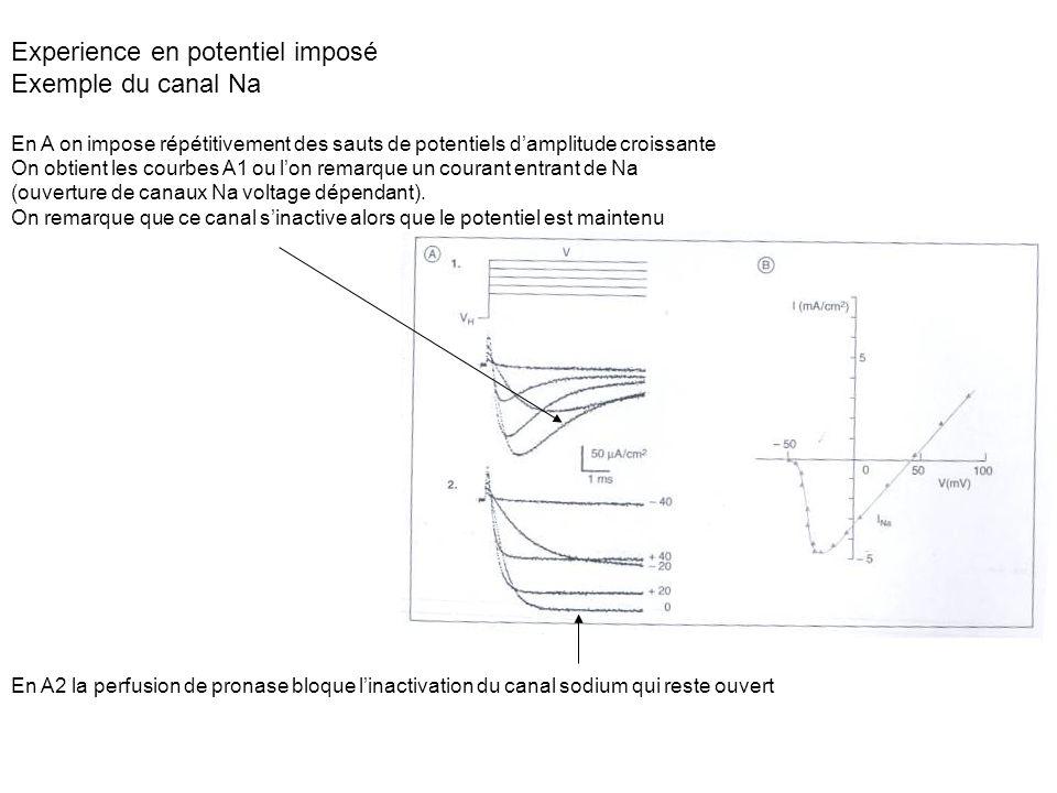 Experience en potentiel imposé Exemple du canal Na