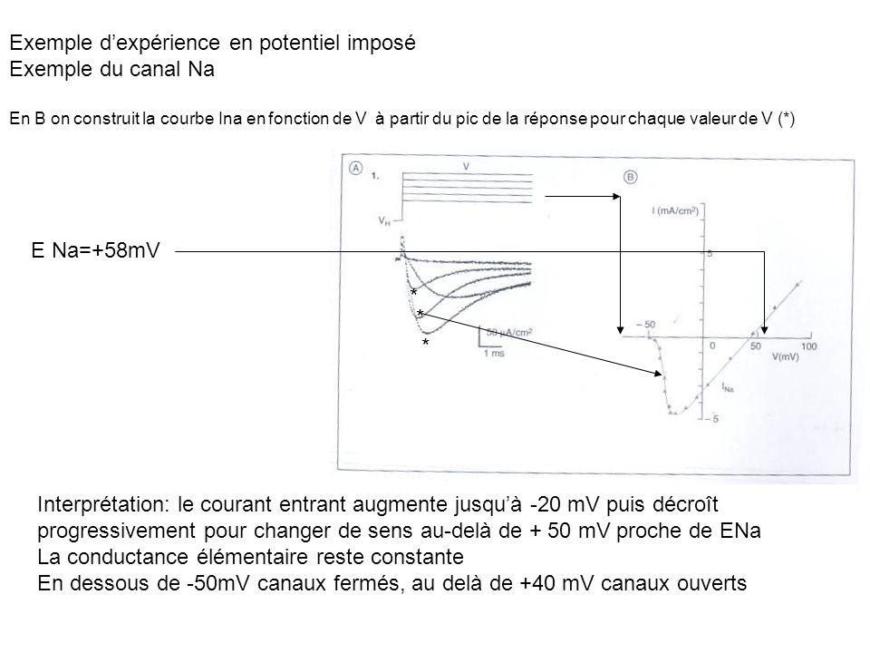 Exemple d'expérience en potentiel imposé Exemple du canal Na