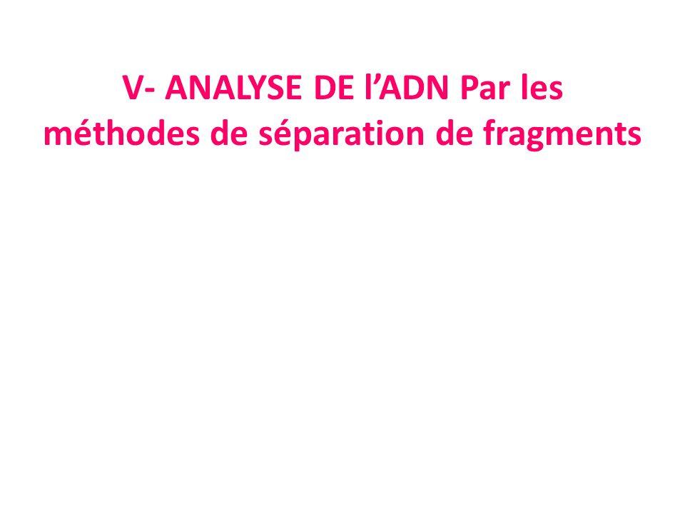 V- ANALYSE DE l'ADN Par les méthodes de séparation de fragments