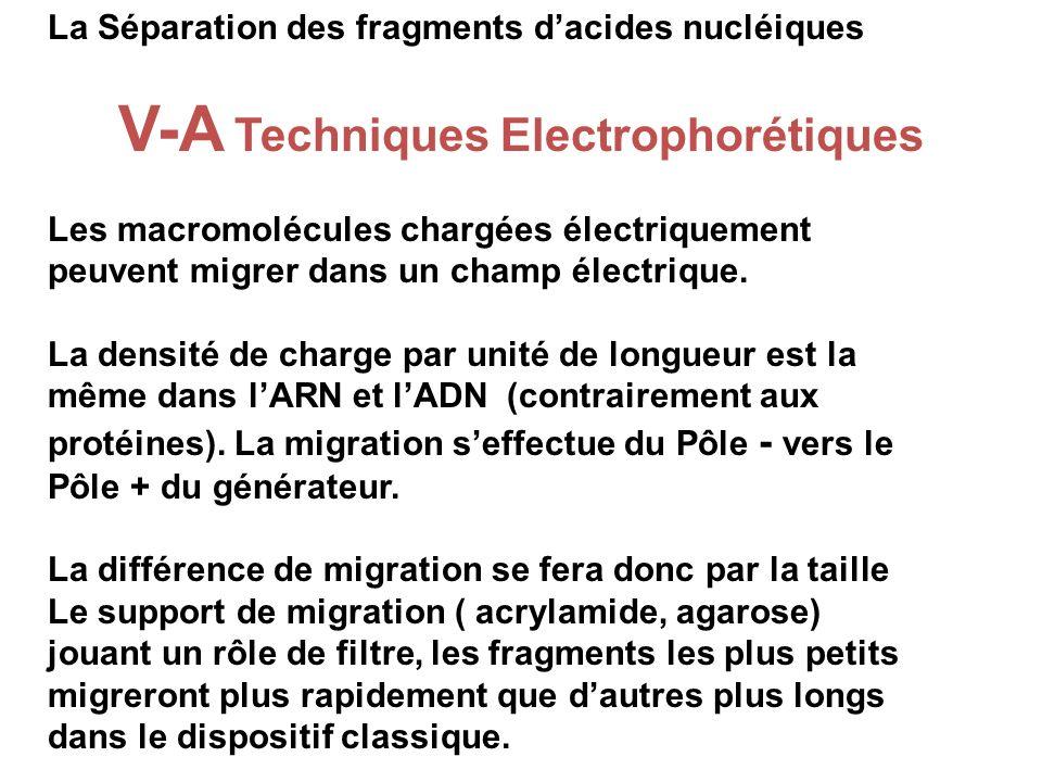 V-A Techniques Electrophorétiques