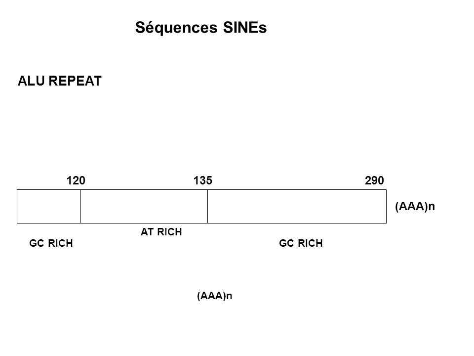 Séquences SINEs ALU REPEAT 120 135 290 (AAA)n AT RICH GC RICH GC RICH