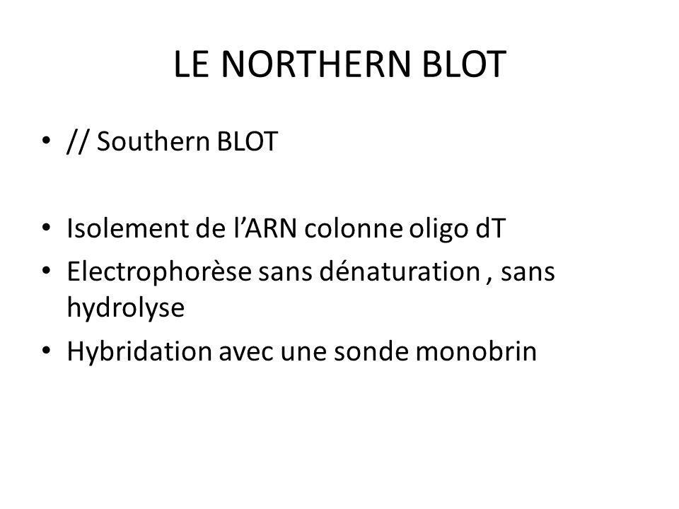 LE NORTHERN BLOT // Southern BLOT Isolement de l'ARN colonne oligo dT