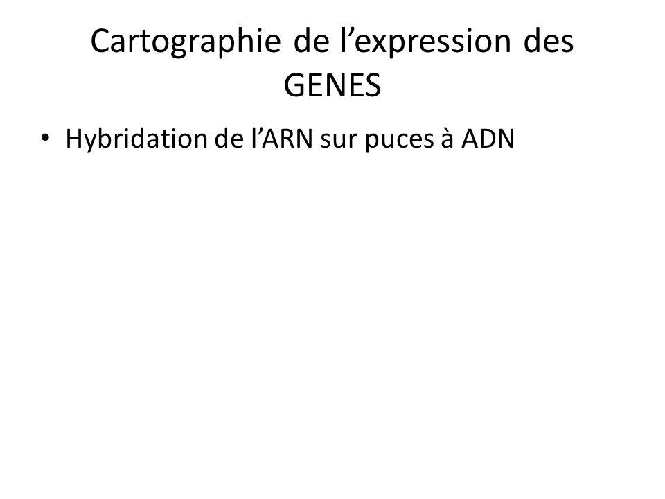 Cartographie de l'expression des GENES