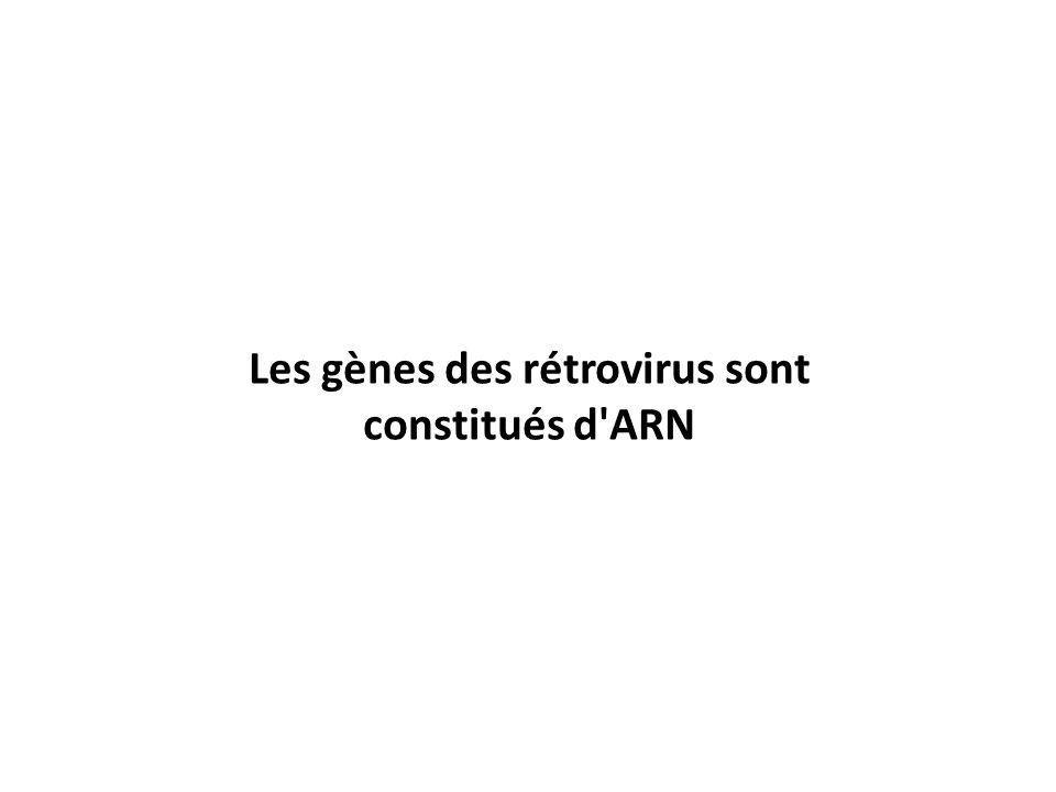 Les gènes des rétrovirus sont constitués d ARN