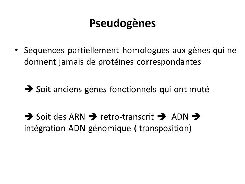 Pseudogènes Séquences partiellement homologues aux gènes qui ne donnent jamais de protéines correspondantes.