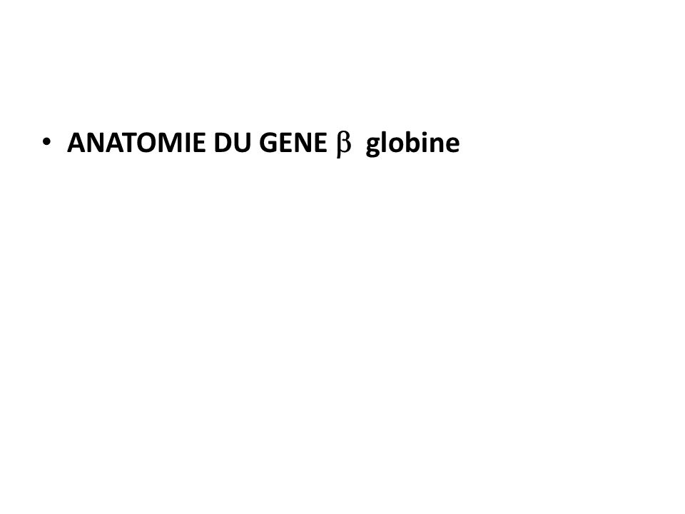 ANATOMIE DU GENE b globine