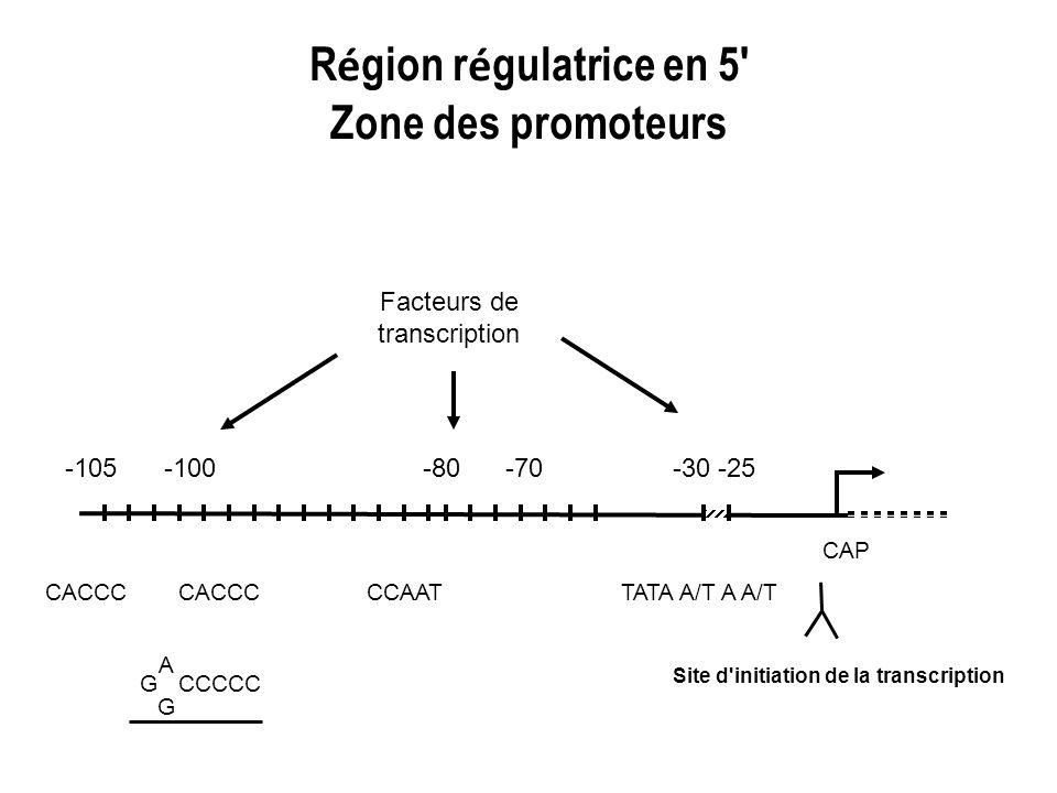 Région régulatrice en 5 Zone des promoteurs