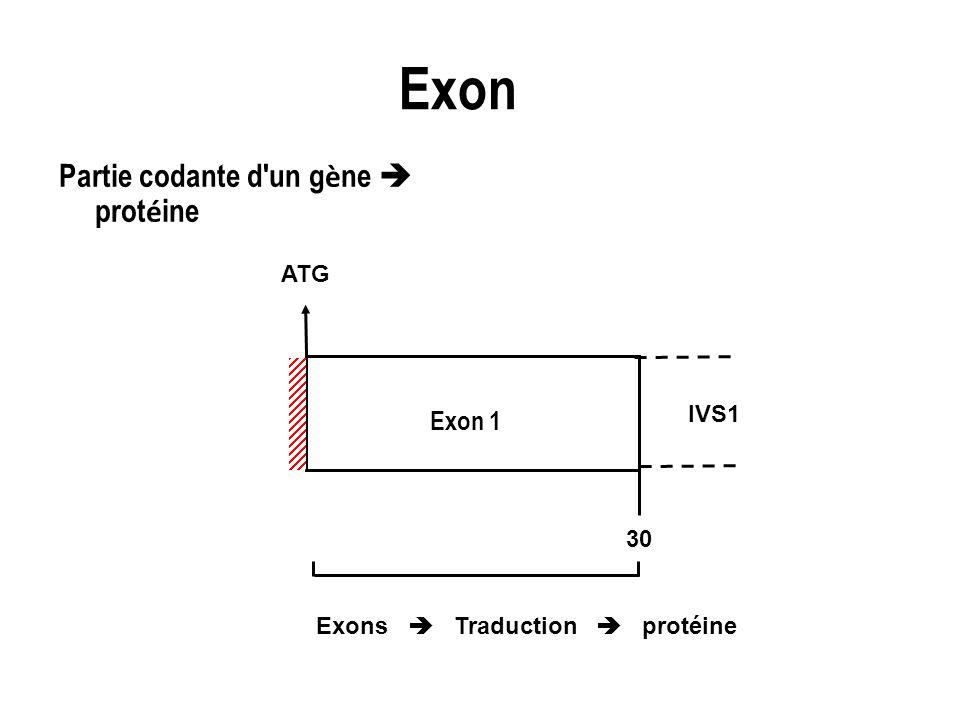 Exon Partie codante d un gène  protéine Exon 1 ATG IVS1 30