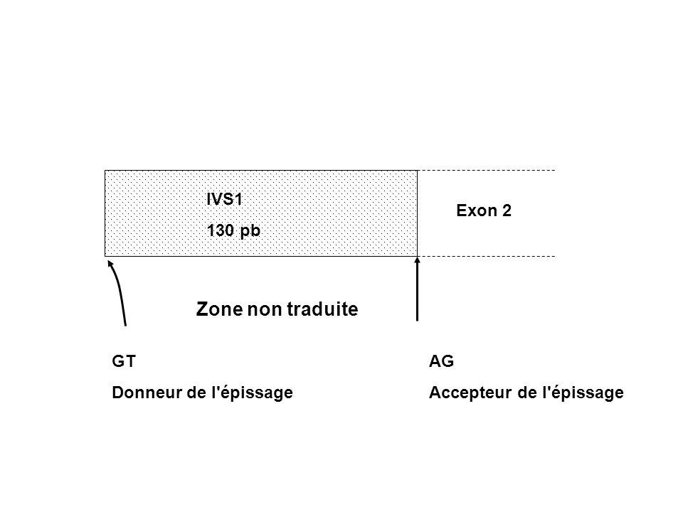 Zone non traduite IVS1 130 pb Exon 2 GT Donneur de l épissage AG