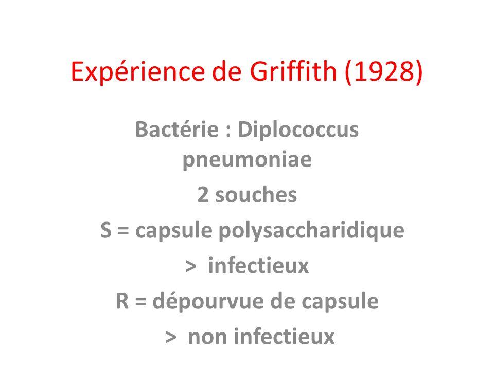 Expérience de Griffith (1928)