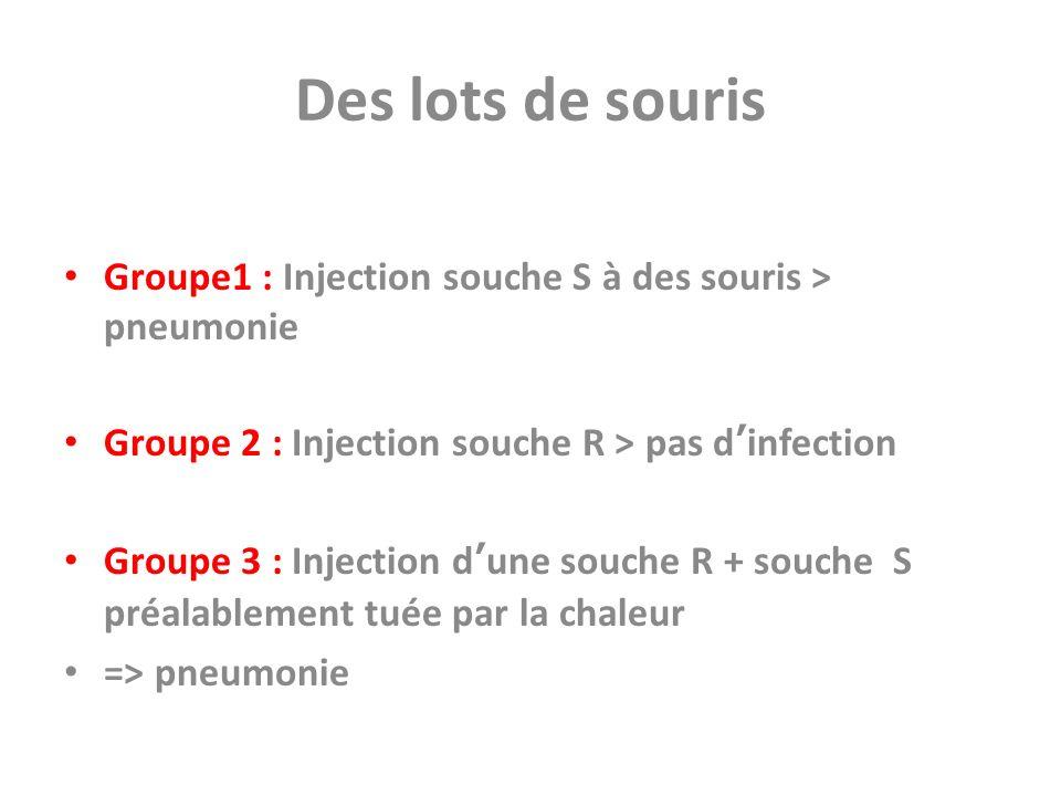 Des lots de souris Groupe1 : Injection souche S à des souris > pneumonie. Groupe 2 : Injection souche R > pas d'infection.