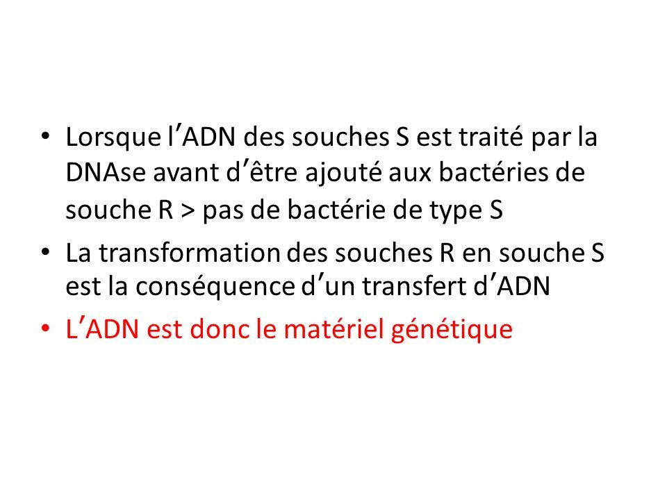 Lorsque l'ADN des souches S est traité par la DNAse avant d'être ajouté aux bactéries de souche R > pas de bactérie de type S
