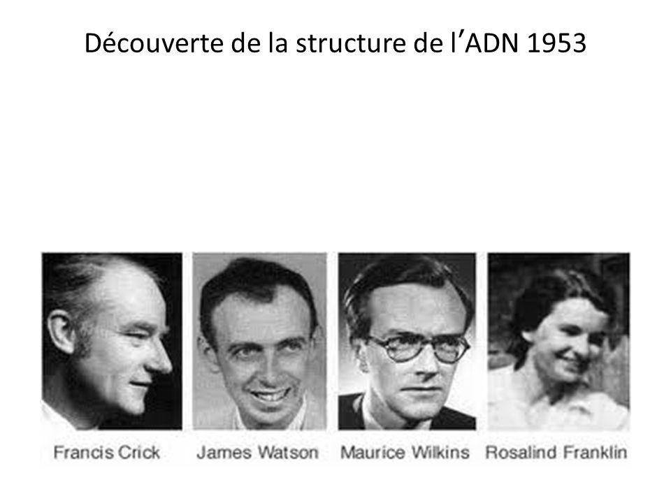 Découverte de la structure de l'ADN 1953