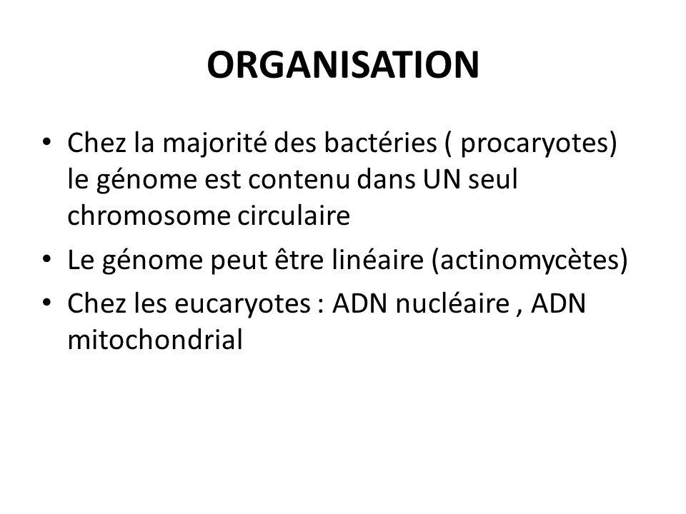 ORGANISATIONChez la majorité des bactéries ( procaryotes) le génome est contenu dans UN seul chromosome circulaire.