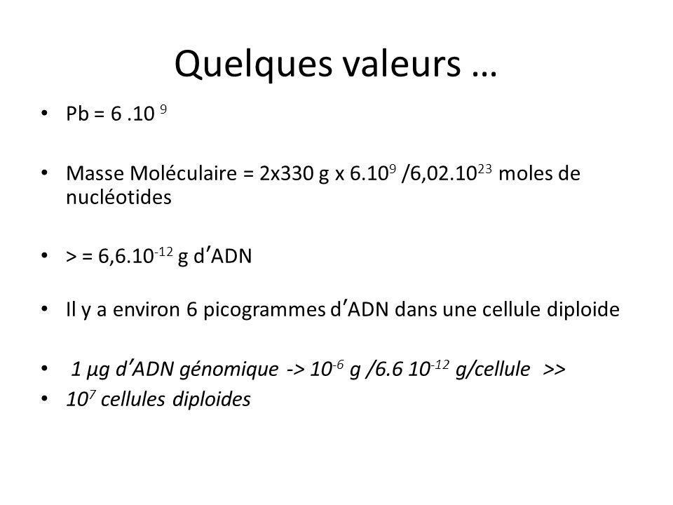 Quelques valeurs …Pb = 6 .10 9. Masse Moléculaire = 2x330 g x 6.109 /6,02.1023 moles de nucléotides.