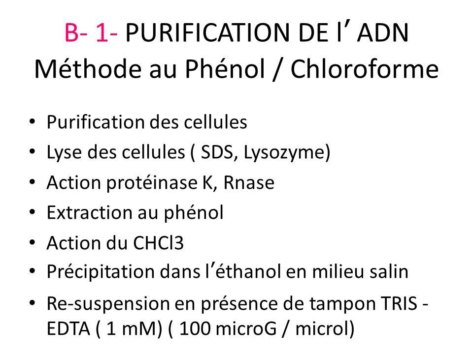 B- 1- PURIFICATION DE l' ADN Méthode au Phénol / Chloroforme