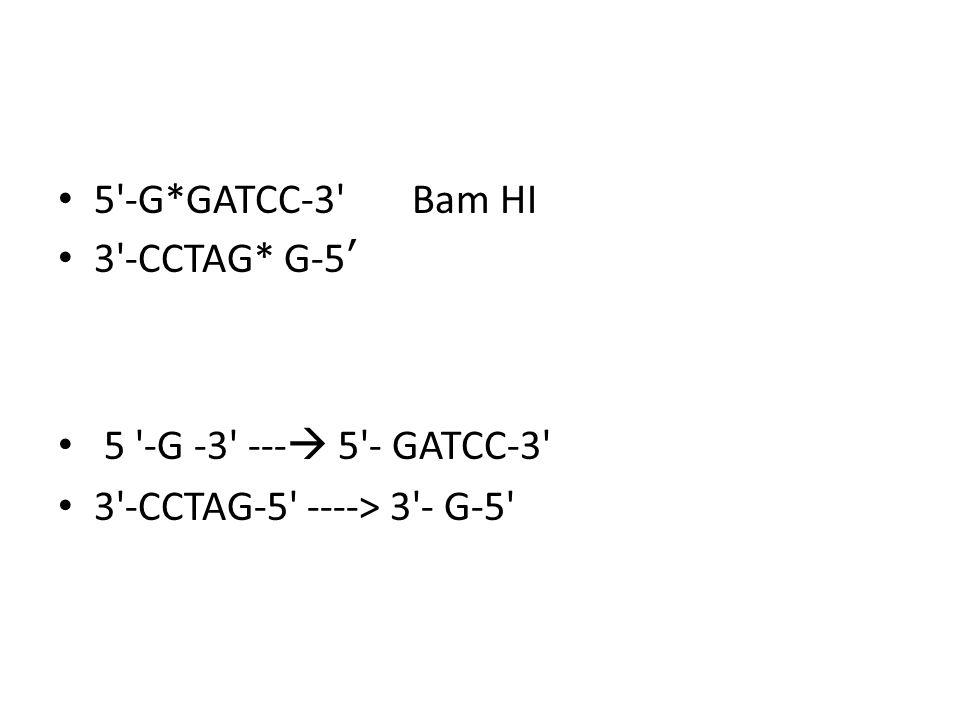 5 -G*GATCC-3 Bam HI 3 -CCTAG* G-5' 5 -G -3 --- 5 - GATCC-3 3 -CCTAG-5 ----> 3 - G-5