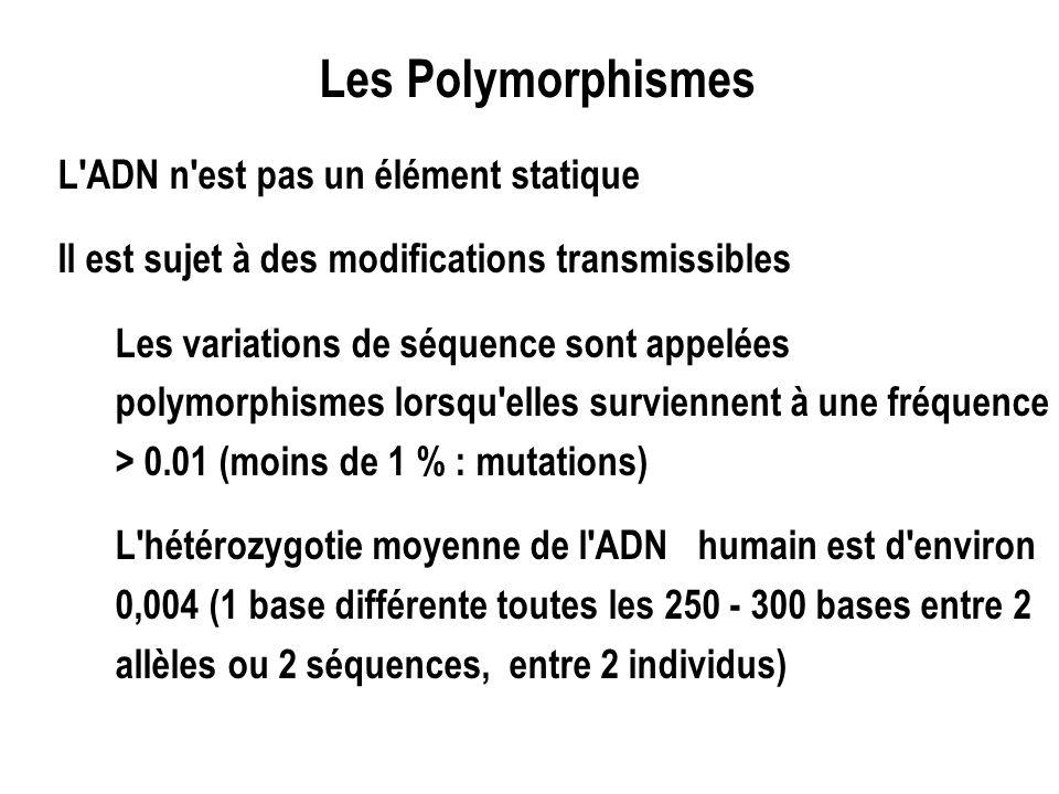 Les Polymorphismes L ADN n est pas un élément statique