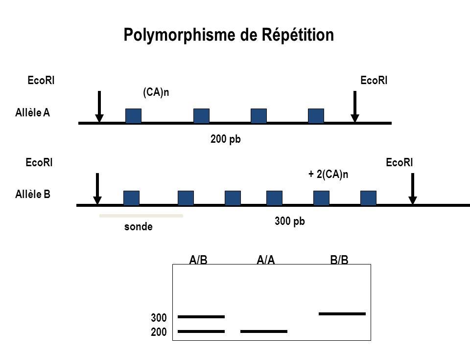 Polymorphisme de Répétition