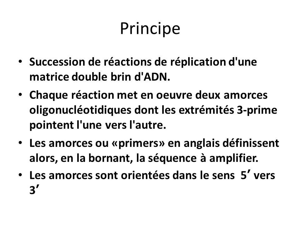 Principe Succession de réactions de réplication d une matrice double brin d ADN.