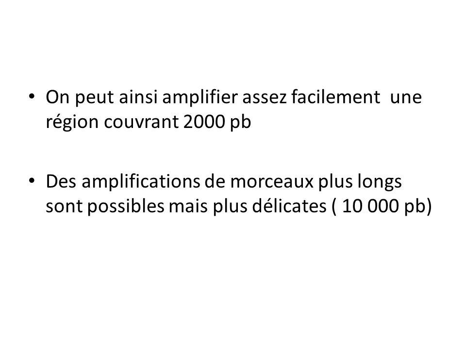 On peut ainsi amplifier assez facilement une région couvrant 2000 pb