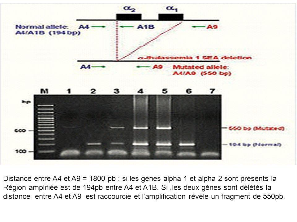 Distance entre A4 et A9 = 1800 pb : si les gènes alpha 1 et alpha 2 sont présents la