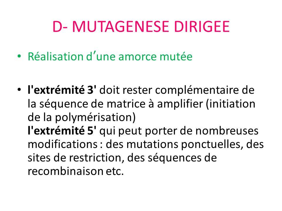 D- MUTAGENESE DIRIGEE Réalisation d'une amorce mutée