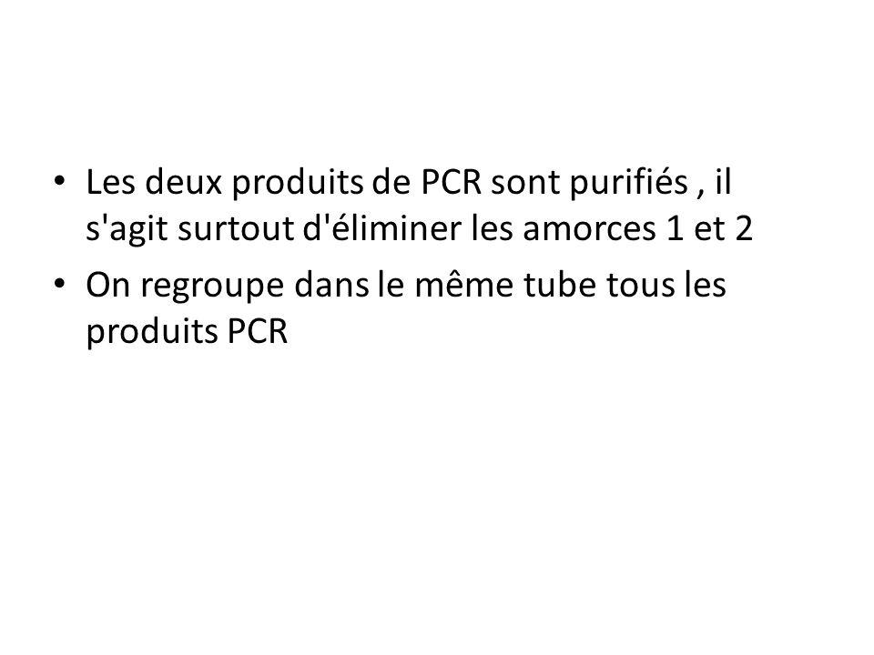 Les deux produits de PCR sont purifiés , il s agit surtout d éliminer les amorces 1 et 2