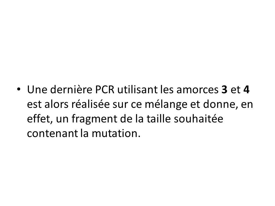 Une dernière PCR utilisant les amorces 3 et 4 est alors réalisée sur ce mélange et donne, en effet, un fragment de la taille souhaitée contenant la mutation.