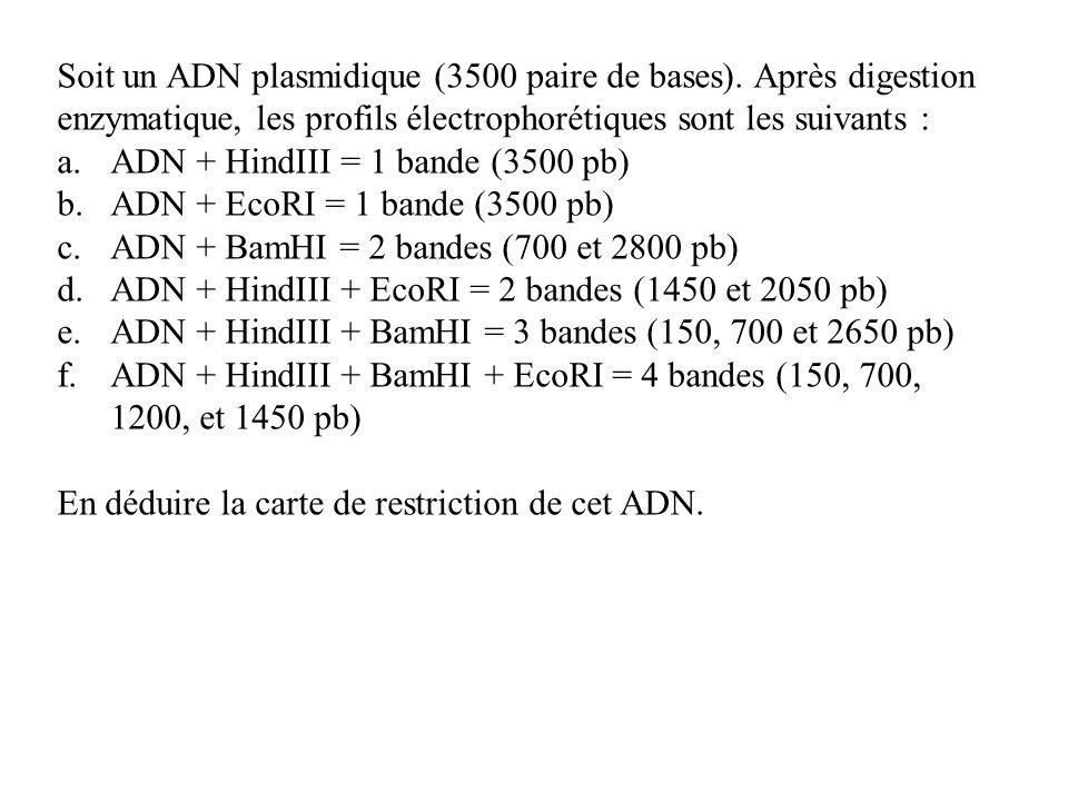 Soit un ADN plasmidique (3500 paire de bases)