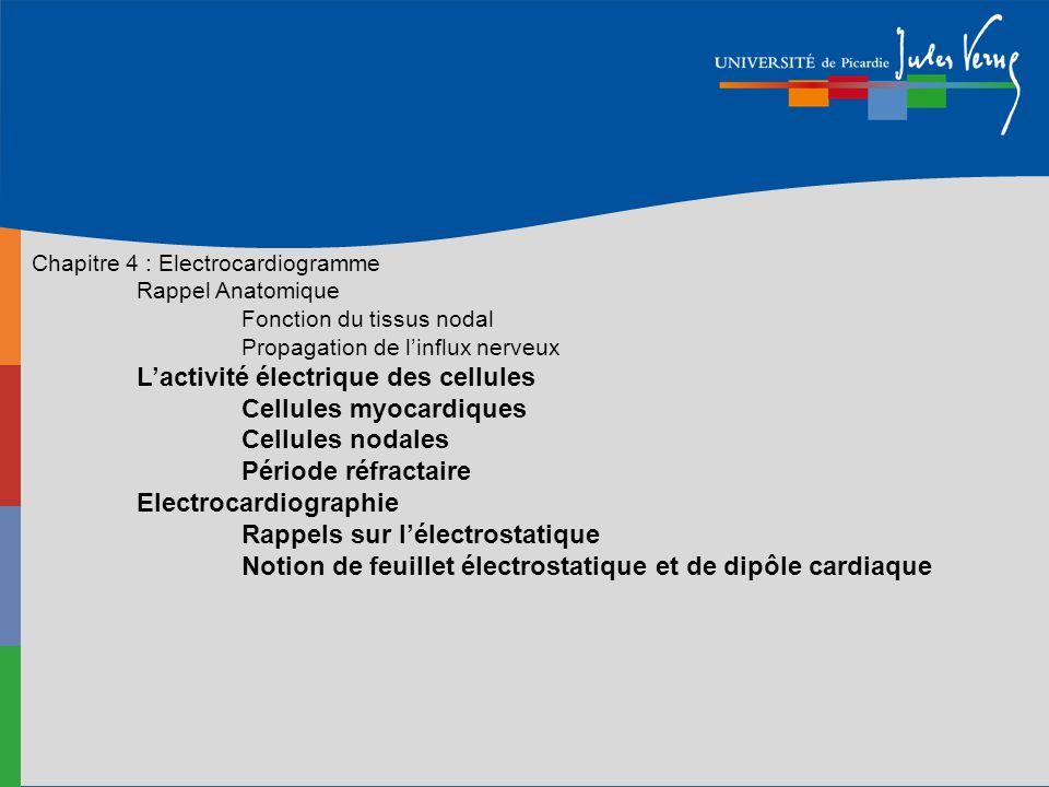 L'activité électrique des cellules Cellules myocardiques