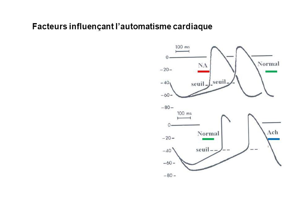 Facteurs influençant l'automatisme cardiaque