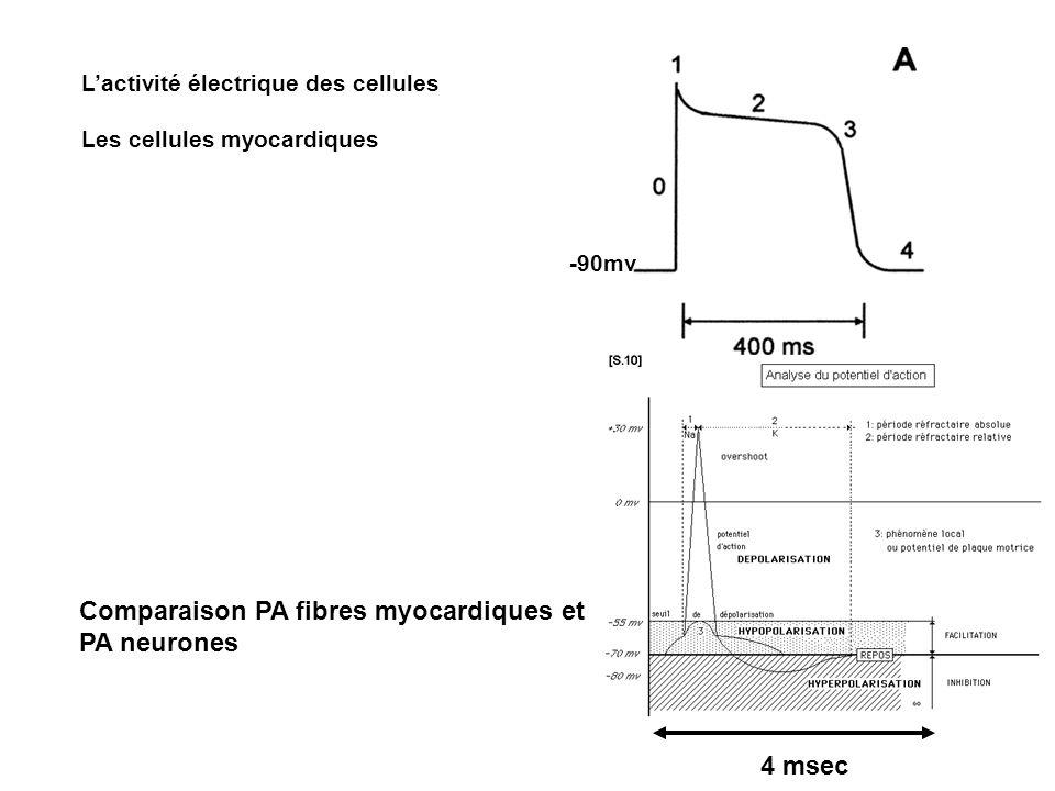 Comparaison PA fibres myocardiques et PA neurones