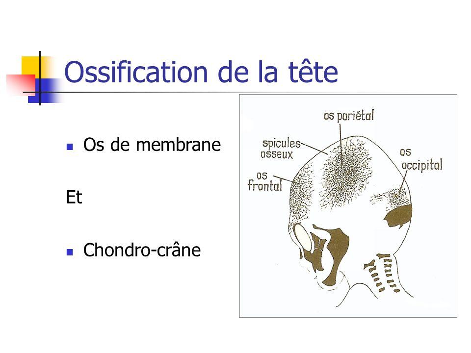 Ossification de la tête