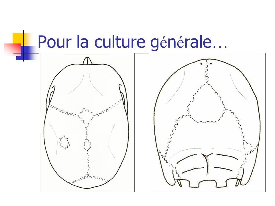 Pour la culture générale…
