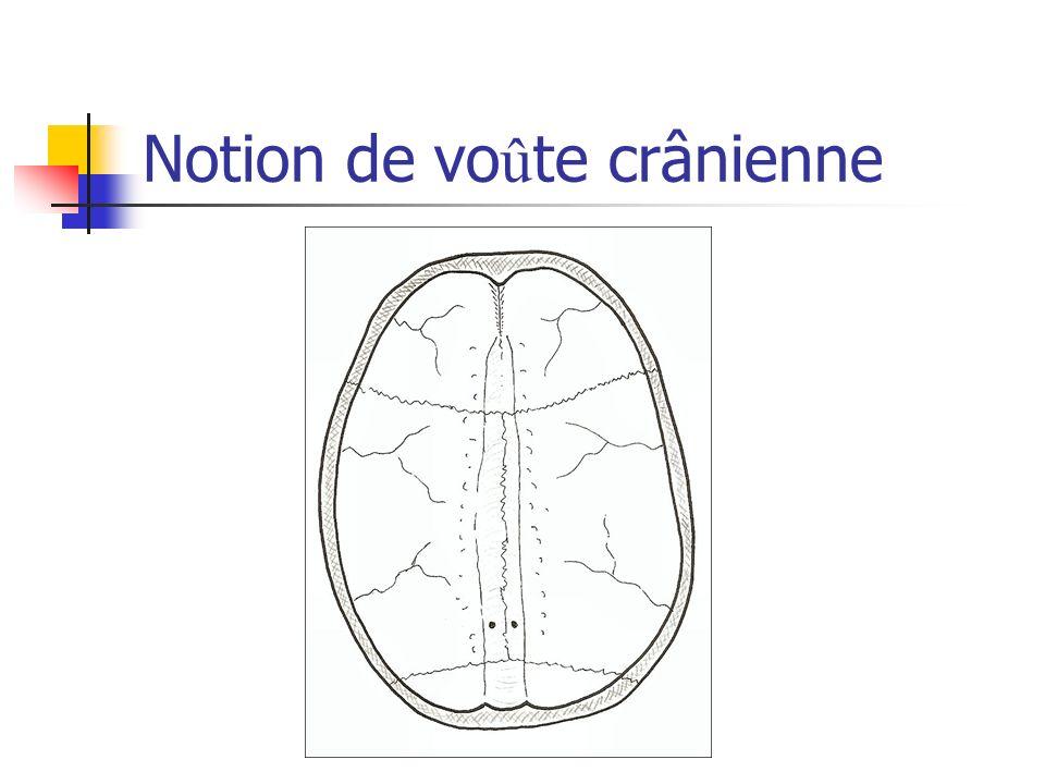 Notion de voûte crânienne