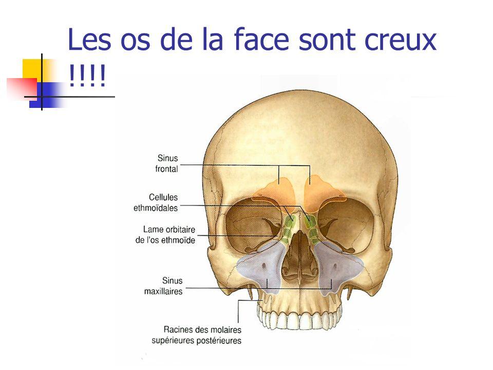 Les os de la face sont creux !!!!