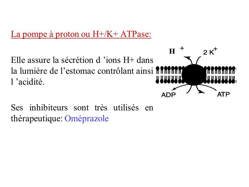 La pompe à proton ou H+/K+ ATPase: