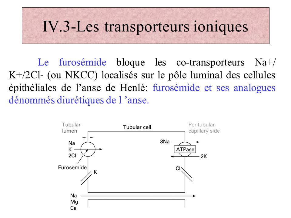 IV.3-Les transporteurs ioniques