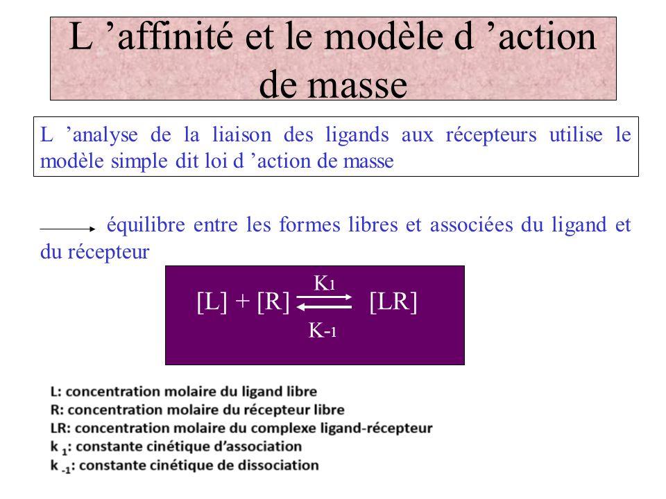 L 'affinité et le modèle d 'action de masse