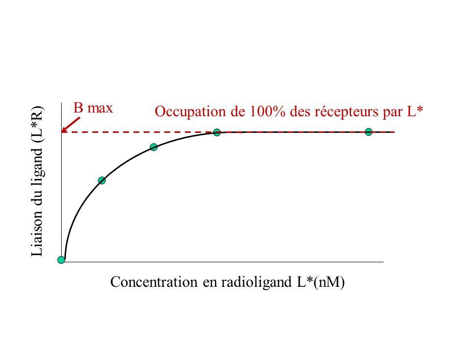 Occupation de 100% des récepteurs par L*