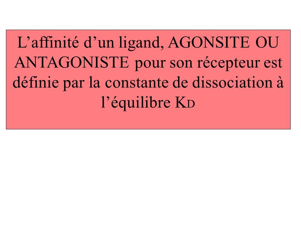 L'affinité d'un ligand, AGONSITE OU ANTAGONISTE pour son récepteur est définie par la constante de dissociation à l'équilibre KD