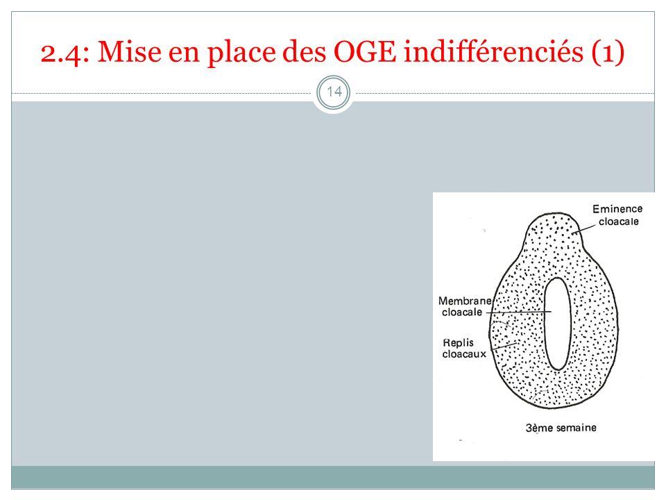 2.4: Mise en place des OGE indifférenciés (1)
